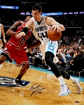 Frank Kaminsky Signed Hornets Dribbling Action vs Bulls 16x20 Photo